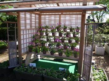 くらしの植物園(2016年5月4日)その5.jpg