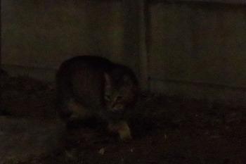 近所の猫(2016年5月20日).jpg